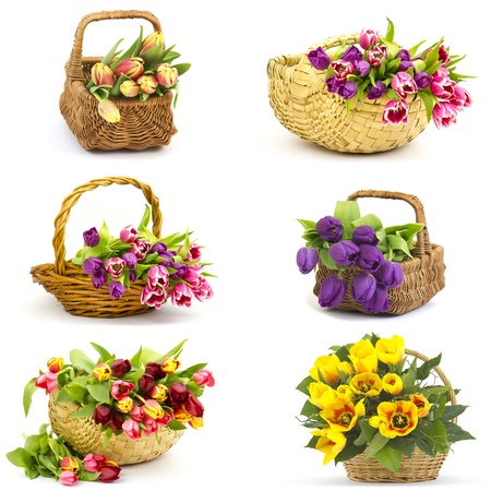colourful tulips - collage Standard-Bild