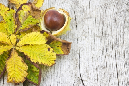 chestnut and autumn leaves photo