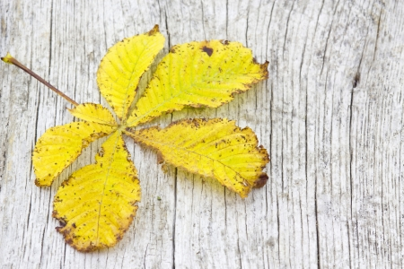 autumn leaf on old wooden background photo