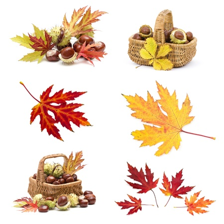 Collage from different autumn leaves and chestnuts photo
