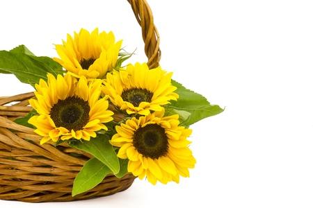 helianthus: Beautiful sunflower bouquet in a basket (Helianthus) Stock Photo