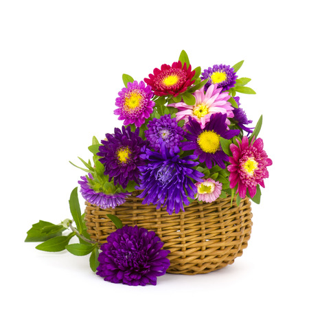 Bouquet of colorful asters flowers in a basket on white background photo