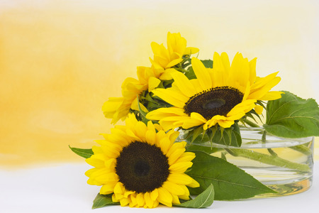helianthus: sunflowers in glass vase (Helianthus) Stock Photo