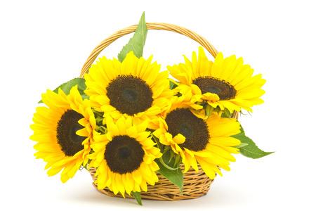 Beautiful sunflower bouquet in a basket (Helianthus) Standard-Bild
