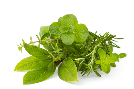 Freshly harvested herbs on white background