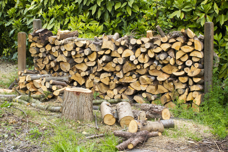 firewood in the garden photo