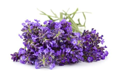 Bunch of lavender flowers on white background  Standard-Bild
