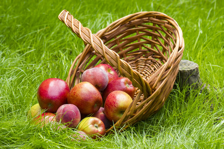 fruits in a basket in summer grass photo