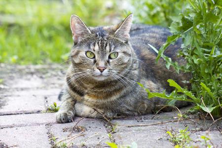 Cat resting in the garden photo
