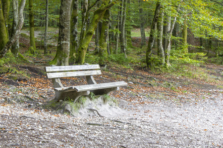 Wood bench in the summer forest photo