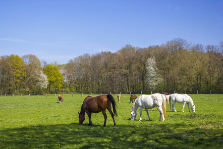 Horses on a spring pasture photo