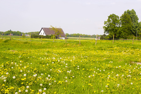 green meadow: Spring meadows around a rural house, Germany