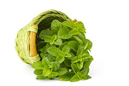 mint leaves: basket with fresh mint on white background