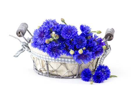 cornflowers: cornflowers in a basket on white background Stock Photo