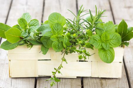 basil: Freshly harvested herbs in a basket