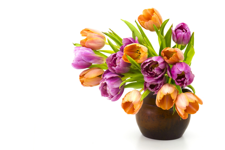 white tulip: colourful tulips in a vase