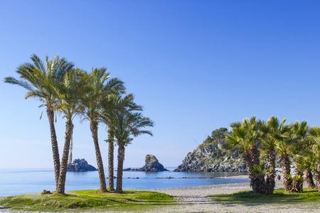 Palmiers sur une plage à Almunecar, Andalousie, Costa del Sol, Espagne Banque d'images - 68277058