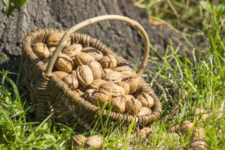 walnuts in a basket