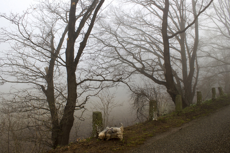 Foggy road and trees. Early morning landscape, Germany Stock Photo