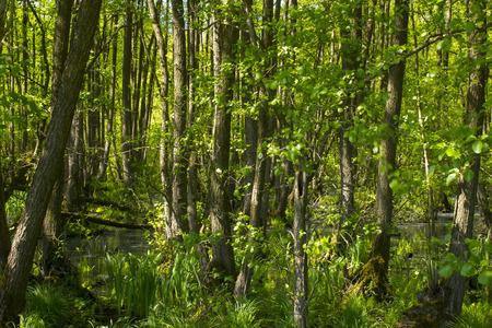 Nature Reserve Fleuthkuhlen in Lower Rhine Region, Germany Stock Photo