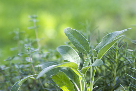 fresh herbs in a garden Stock Photo
