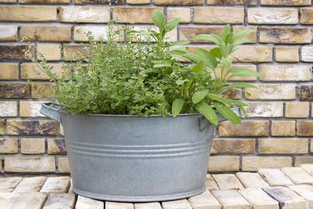 fresh herbs in old wash tubs on brick wall Stock Photo