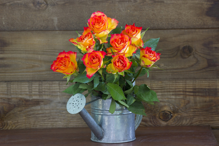 orange roses in a watering can on wooden background Stock Photo