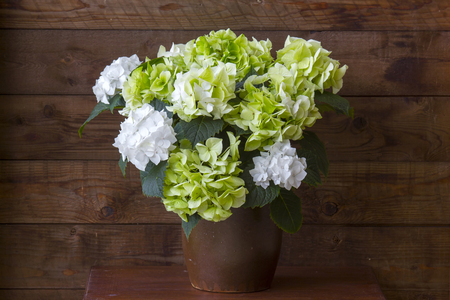 hortensia flowers, Hydrangea macrophylla, wooden background