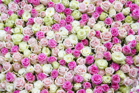 roses background - white and pink roses