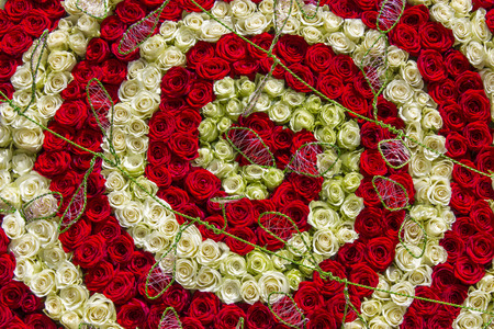 roses background - white and red roses