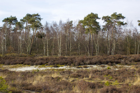 National Park Maasduinen in the Netherlands.
