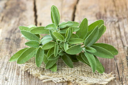 fresh sage on wooden background