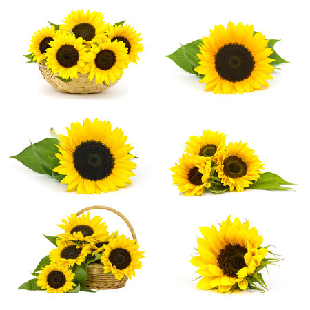 Beautiful sunflowers (Helianthus) - collage Stock Photo