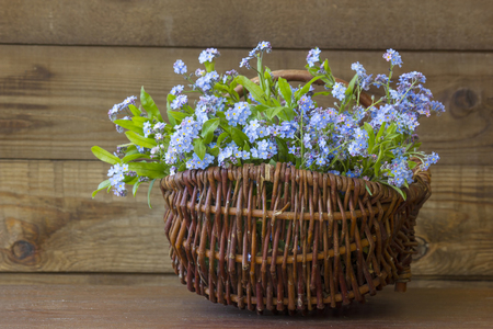 Forget-me-not flowers in the basket on old wooden background Stock Photo