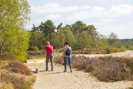 Heathland in National Park Maasduinen in the Netherlands - couple with their dog Stock Photo