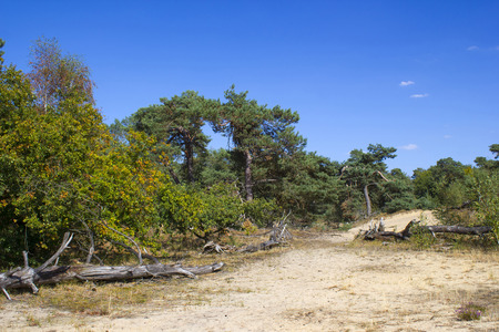National Park Maasduinen in the Netherlands