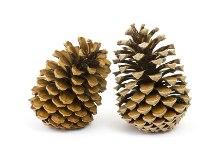 The cones pine on a white background Stock Photo