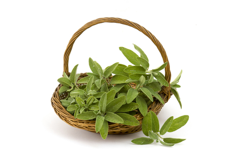 basket with fresh sage on white background