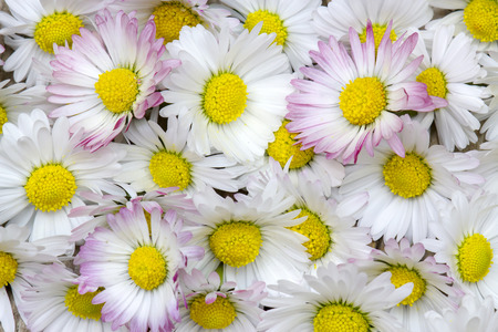 background with daisies flowers