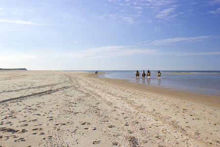 riders on horses on the beach in Renesse, Zeeland, the Netherlands