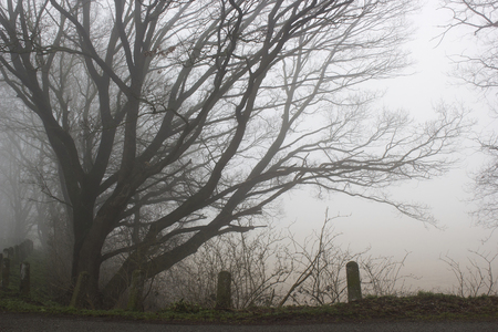 Foggy road and trees. Early morning landscape, winter, Germany