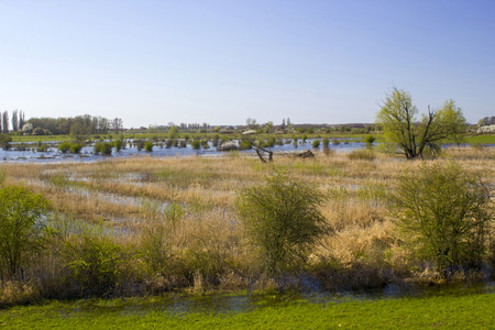 floodplains along the Rhine, Netherlands, Gelderland
