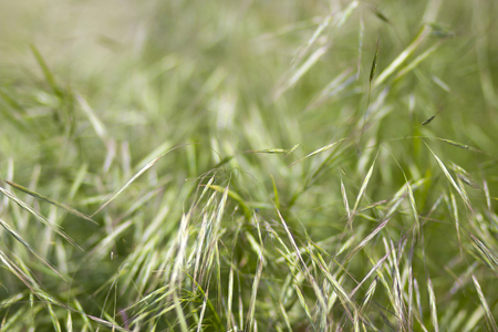 Fresh green grass. Soft Focus. Abstract Nature Background 写真素材
