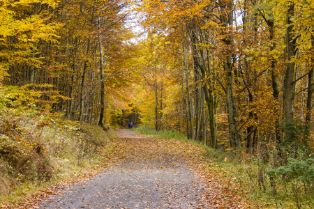 Autumn in forest, Sauerland, Germany 写真素材