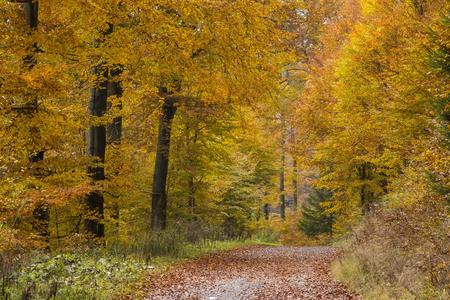 utumn in forest, Sauerland, Germany 写真素材