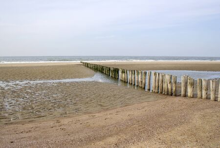 Wave breaker made of wooden stakes on the beach, Renesse, Netherlands Фото со стока
