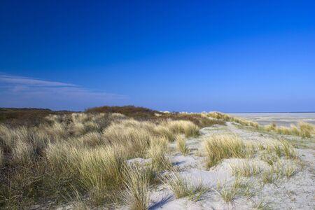 the dunes, Renesse, Zeeland, the Netherlands
