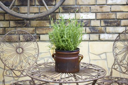 beautiful place in the garden in the mediterranean style, pot with lavender on the table Stok Fotoğraf