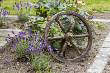 flowerbed in the garden - lavender and roses