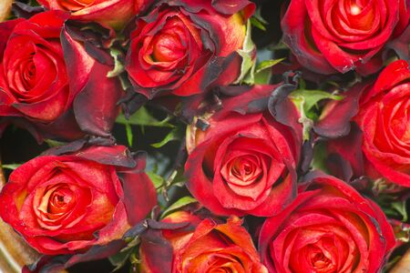 close up of red roses - background